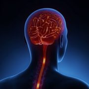 Neurosurgery Associates Services